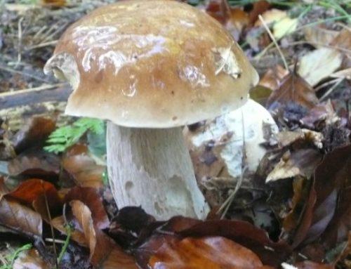 6 wichtige Tipps zum Pilze suchen