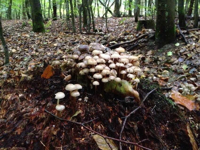 Waldpilze auf Totholz - Baumzersetzer
