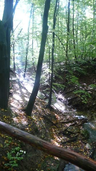Waldspaziergang im Oktober