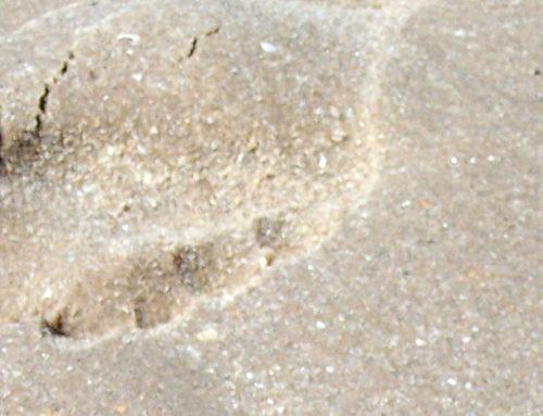 Natur und Umweltschutz: Der ökologische Fußabdruck