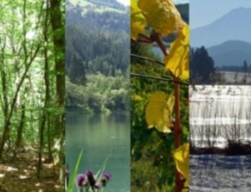 Naturkalender 2014 mit Auszeichnung