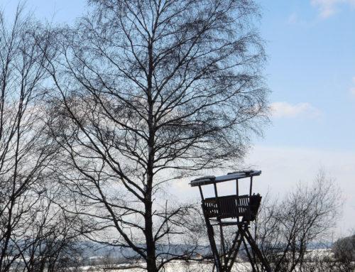 Natur erleben – Bäume im Winter