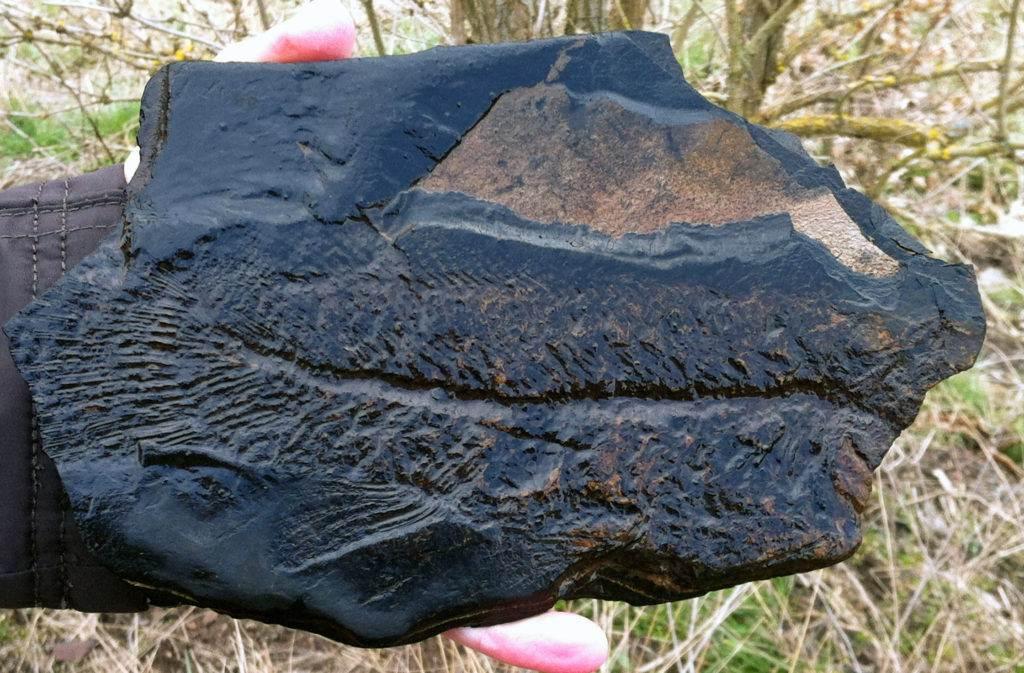 Ein Messel-Fossil