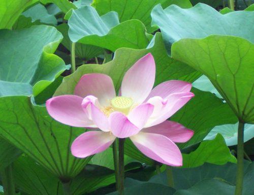 Meditation zum Jahresanfang – Affirmationen zu Yamas und Niyamas