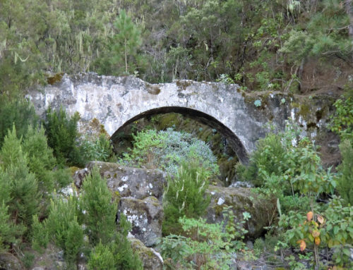 Wandern auf Teneriffa – Barranco Madre del Agua, Orotavatal