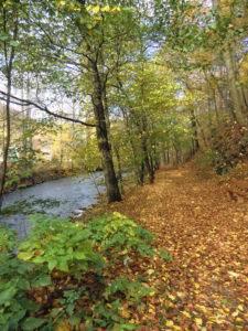 Entlang der Oder im Harz.