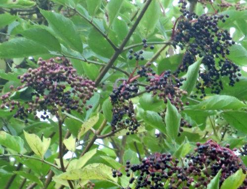 Tipp – Pflanzen Märchen und ein einzigartiger Märchenerzähler