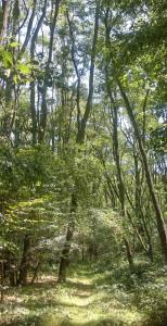 Wald natur bücher gewinnen
