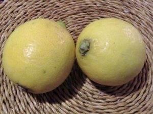 Bio - Zitronen (Citrus limon)