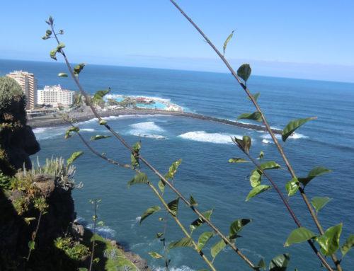 Wandern Teneriffa – Von Puerto de la  Cruz zum Playa Bollulo