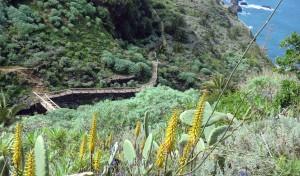 Wanderung Teneriffa - Puerto Cruz