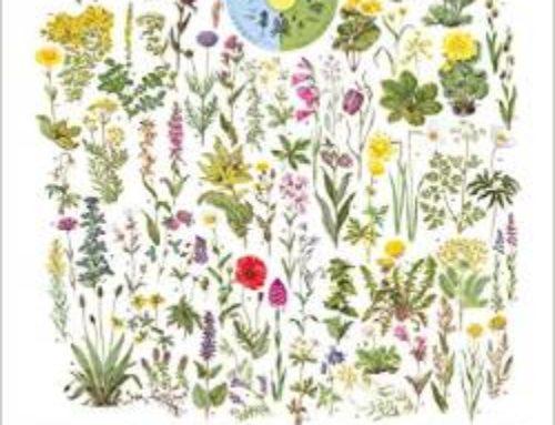 Tipp – Kalender Naturtafeln 2015