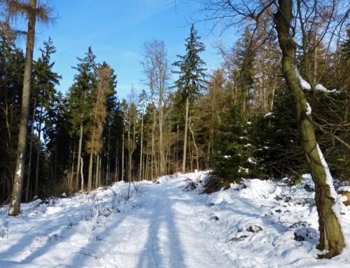 Bad Homburg Rundwanderweg über Pelagiusplatz zur Gickelsburg