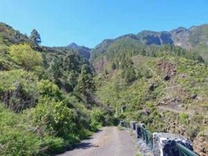 Wandern Teneriffa Süd bei Arafo.