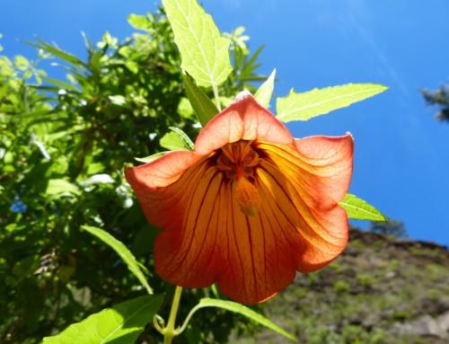 Teneriffa Süd Wandern von Arafo zum Baranco de Amanca
