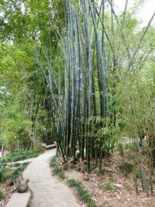 Wege führen durch hohes Bambusgehölz im Botanischen Garten, Hong Kong.