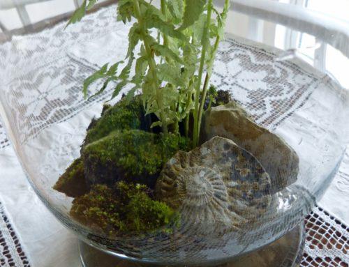 Buchtipp – Indoor Gärtnern mit Miniaturgarten