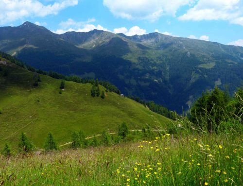 Wanderung zum Pustertaler Almweg am Compedal