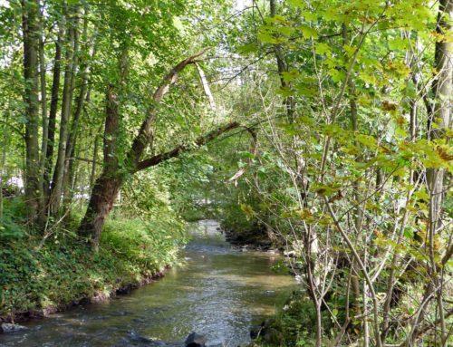 Buchtipp – Das geheime Leben der Bäume