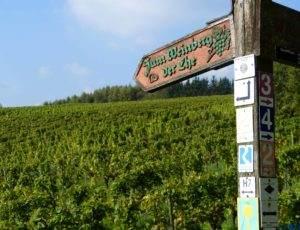 Rheinsteig Wanderungen Etappe 2
