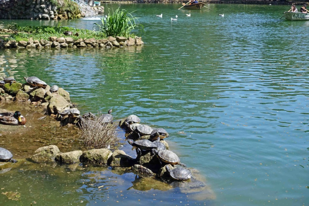 grüne oase in rom villa borghese teich