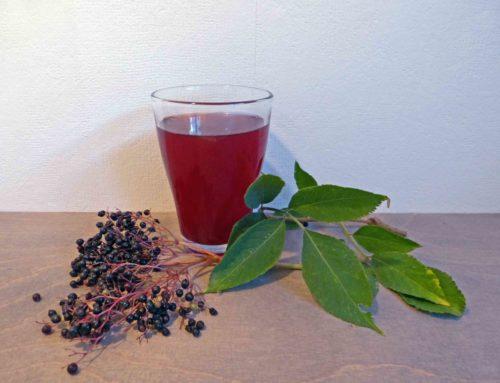 Rezept – Holundersirup aus Holunderbeeren