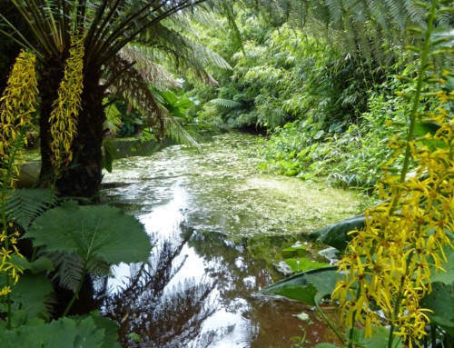 Cornwall – Besuch in Lost Gardens of Heligan