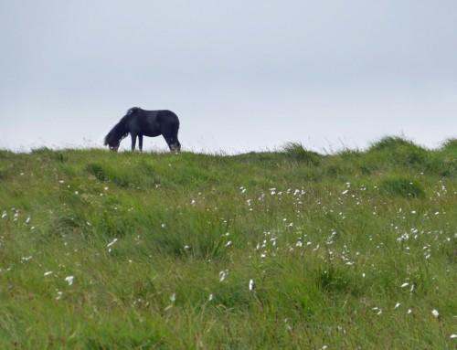 England, Devon – Wandern in Dartmoor