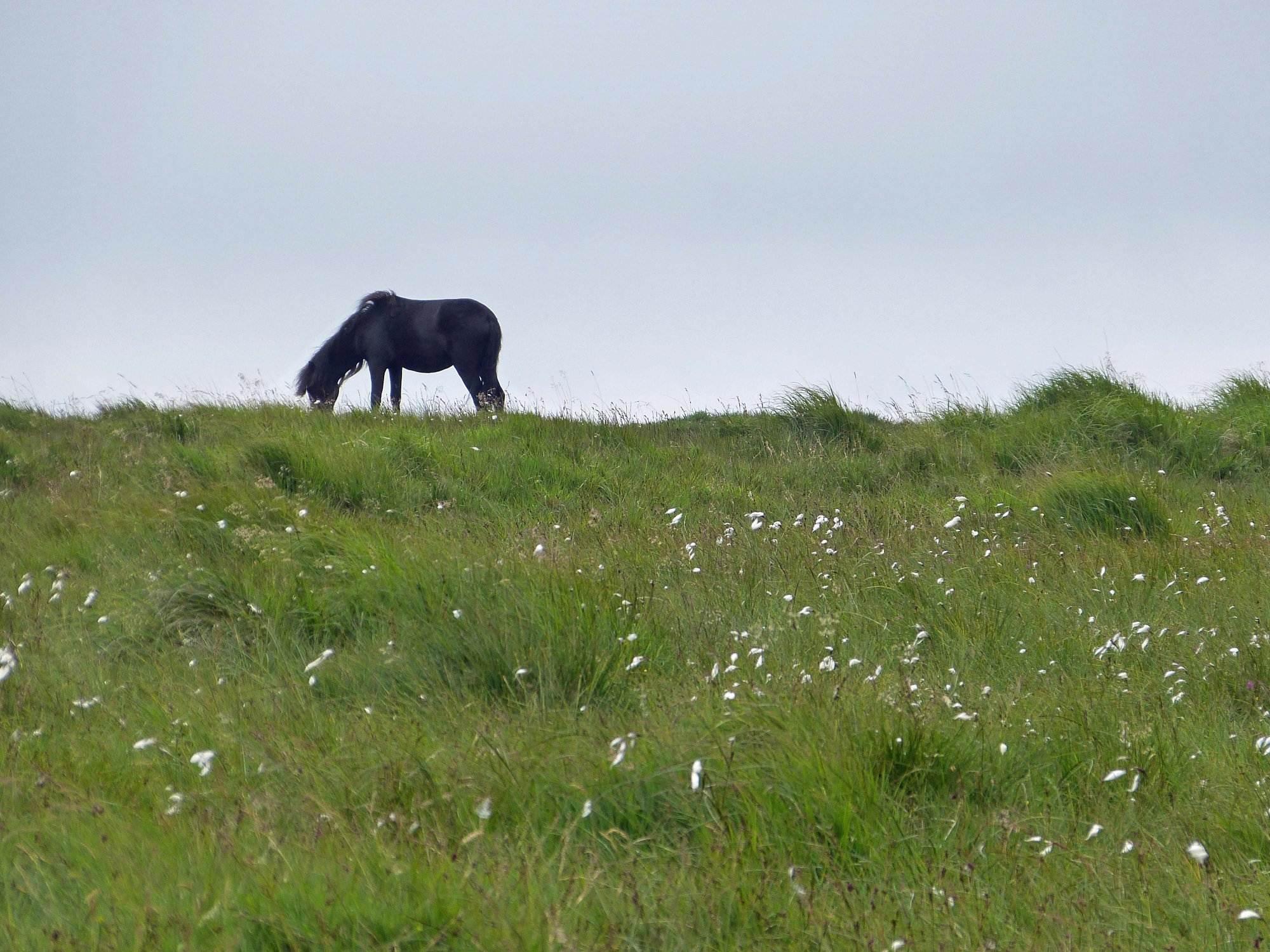 Dartmoor wandern