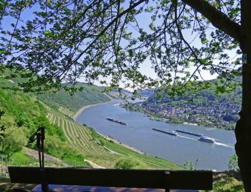 Rheinsteig Etappe 5 von Rüdesheim nach Lorch