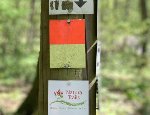 Rundwanderung Natura Trail im Taunus