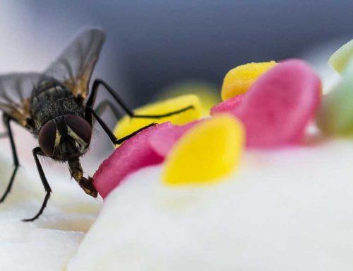 Nachhaltige Schädlingsbekämpfung