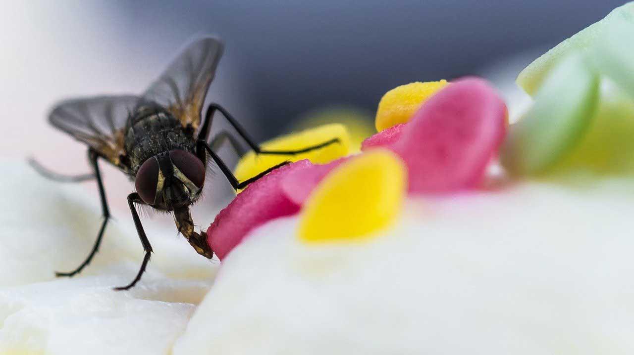 Nachhaltige Schädlingsbekämpfung: Fliege auf Torte