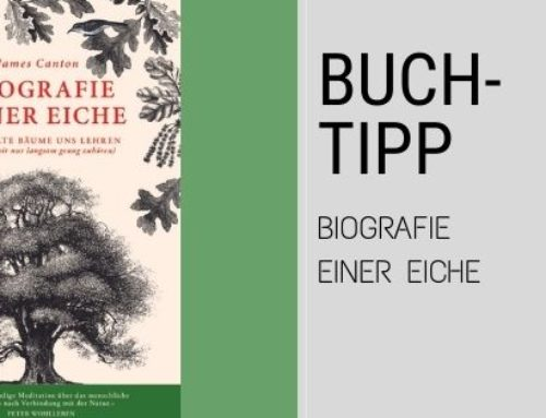 Buchtipp – Biografie einer Eiche – Über das Leben mit einerEiche